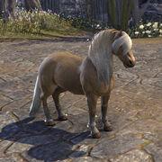 Имперское пони Белого Золота