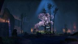 Elden Root Outlaws Refuge