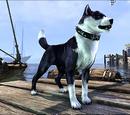 Black Mask Bear-Dog