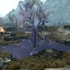 Śpiące drzewo z gry The Elder Scrolls V: Skyrim