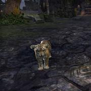 Детёныш сенч-тигра