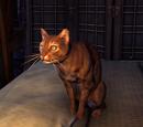 Ebony (Cat)