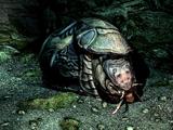 Shellbug