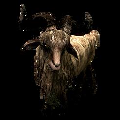 Коза Гледа Gleda the Goat 002