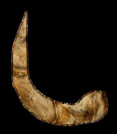 Рог минотавра