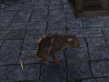 Bethamez (Cat)