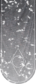 TESV Banner ThievesGuild.png
