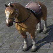 Palomino Horse Лошадь паломино