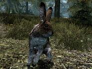Скрин - Кролик