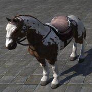 Brown Paint Horse Пегая лошадь
