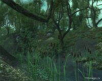 Деменция, джунгли