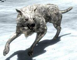 Снежный волк Skyrim