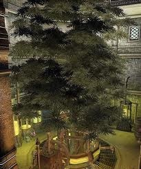 File:Blackwood Hist Tree.jpg