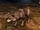 Aspect du loup