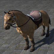 Bay Dun Horse Саврасая лошадь