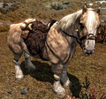 Frost Horse.png