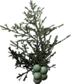 Juniper berries.png