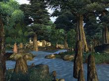 Чёрный лес (Арт)