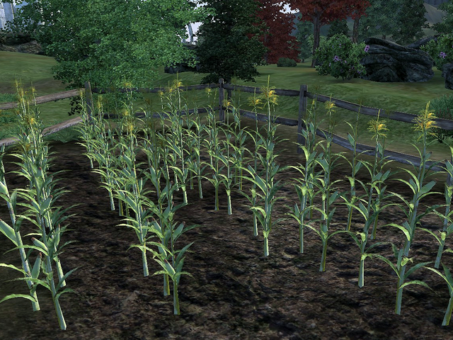 File:CornStalk.png