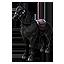 Midnight Steed Полуночный жеребец иконка