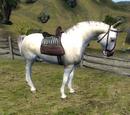 Horse (Oblivion)