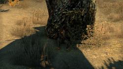 Собака мага 01