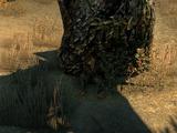 Собака мага