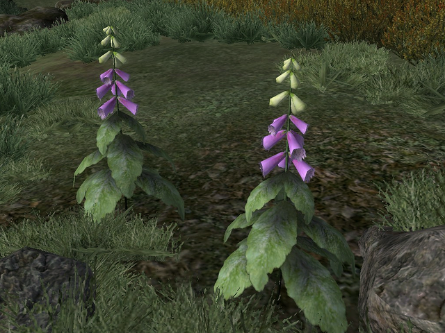 File:Foxglove Nectar.png