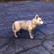 Зимний щенок Карта