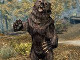 Niedźwiedź (Skyrim)