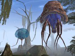 Нетч (Morrowind)