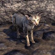 Сторожевая кошка Гильдии магов