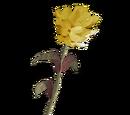 Жёлтый горноцвет (Dawnguard)