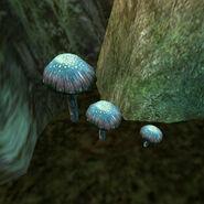 Лиловый копринус (гриб) 01