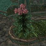 Тимсовые цветы 03