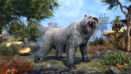Grey Feral Guardian Bear