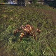 Тигельный паук-питомец