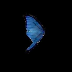 Крыло синей бабочки