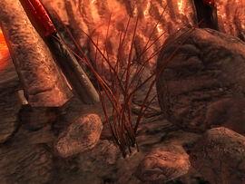 Кровавая трава (Обливион)