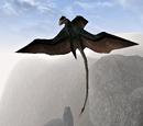 Cliff Racer (Morrowind)