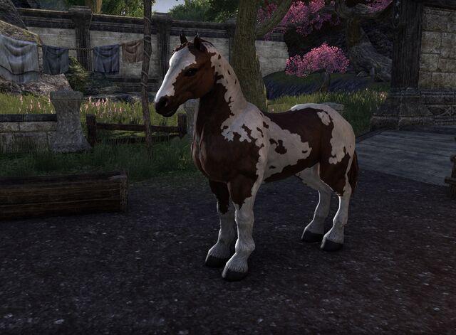 File:Draft horse.jpg