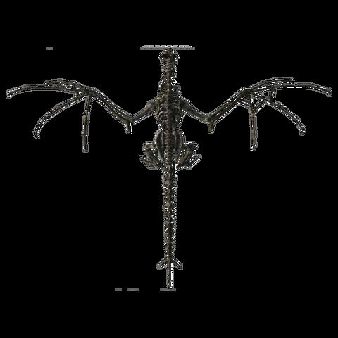 File:Skeletaldragon Top.png