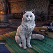 Разноглазая кошка с раздвоенными ушами