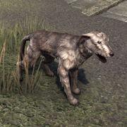 Виндхельмский волкодав (питомец)
