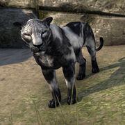 Сенч-пантера призрачной тени