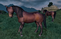 Wild Bay Horse.png