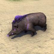 Пурпурный щетиноспин