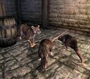 A Rat Problem