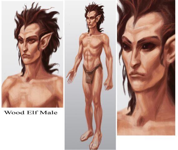 File:Wood Elf Male.jpg