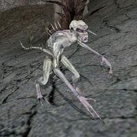 Алчущий (Morrowind)